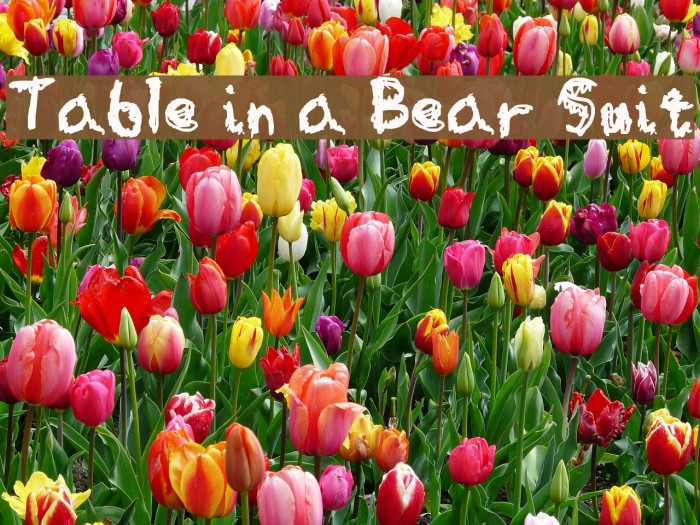Table in a Bear Suit Fonte examples