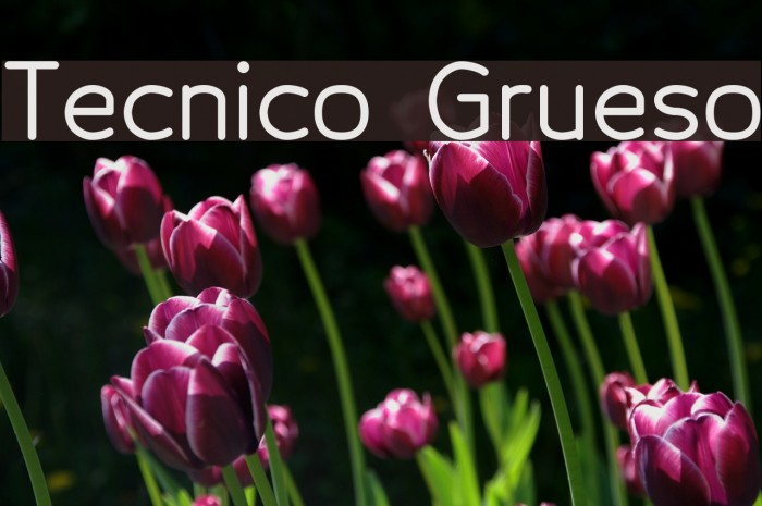 Tecnico Grueso Fonte examples