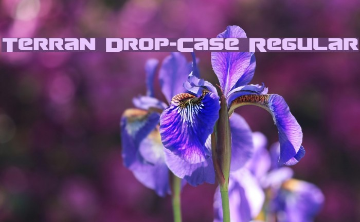 Terran Drop-Case Regular Fonte examples