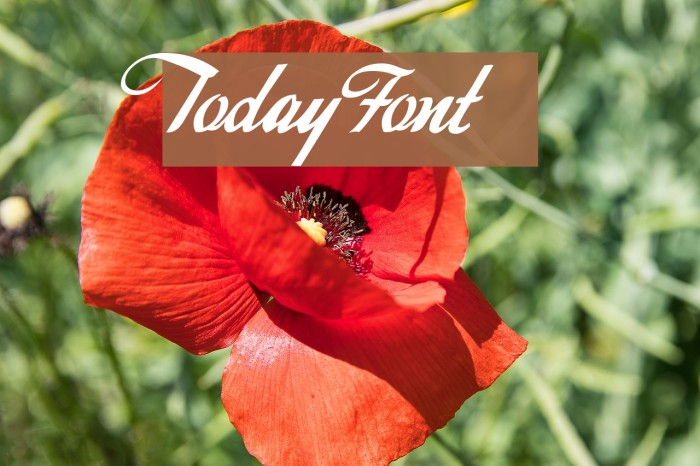 Today Font examples