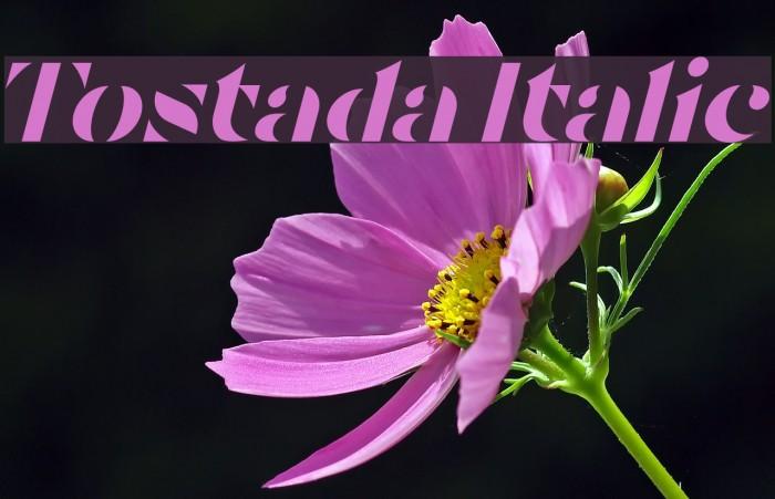Tostada Italic Caratteri examples