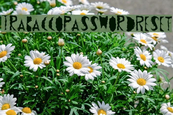 TrabaccoPasswordReset Schriftart examples
