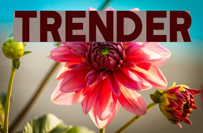 Trender Font examples
