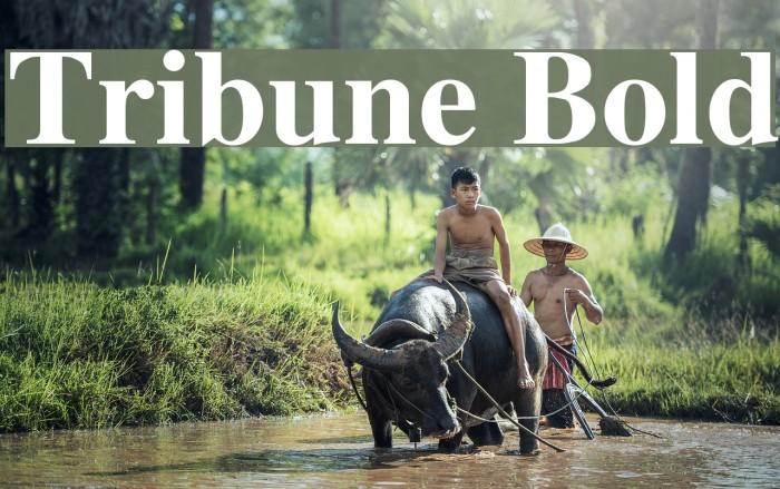 Tribune Bold Шрифта examples