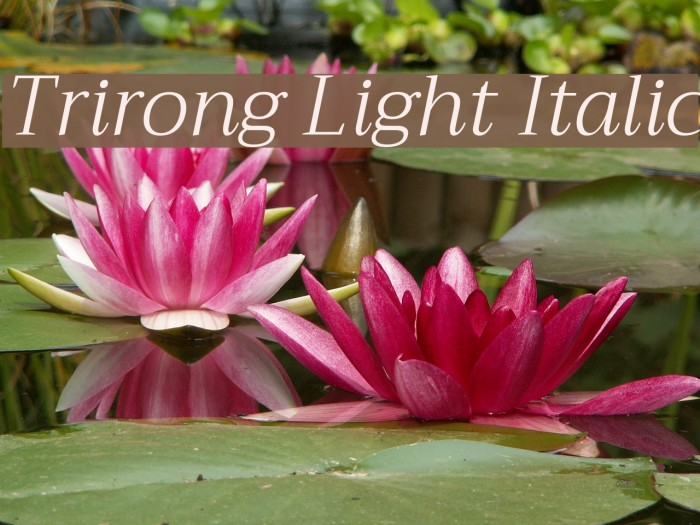Trirong Light Italic Fonte examples