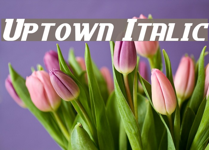 Uptown Italic フォント examples