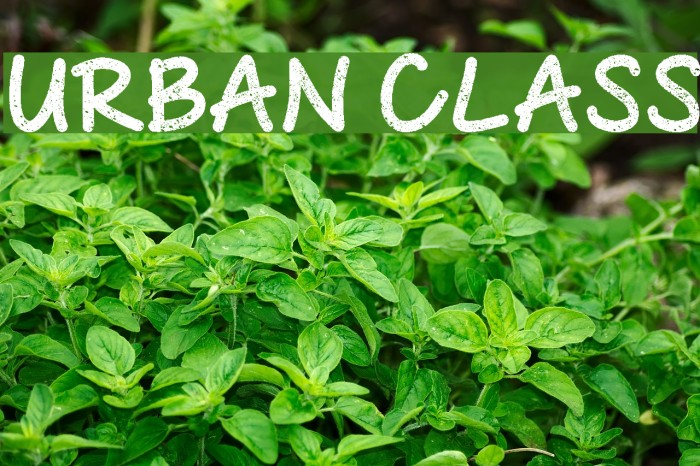 Urban Class Font examples