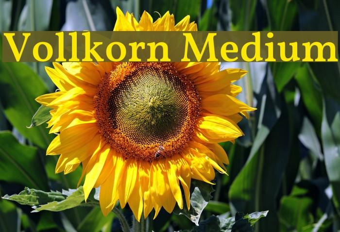 Vollkorn Medium Fuentes examples