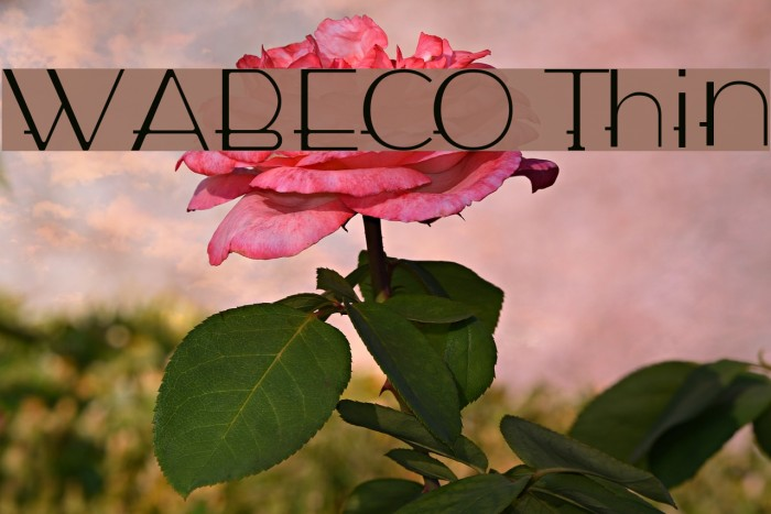 WABECO Thin फ़ॉन्ट examples