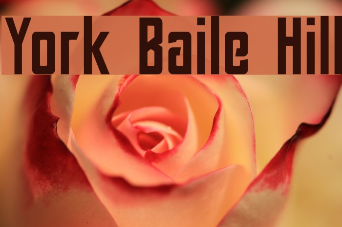 York Baile Hill Font examples