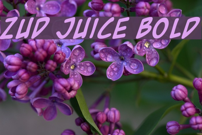 Zud Juice Bold フォント examples